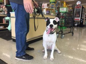 Dog in Pet Supply Plus Store