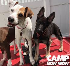 Camp Bow Wow 2 dogs