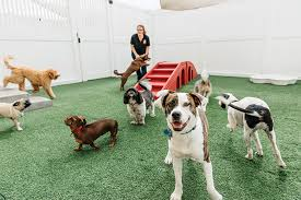Camp Bow Wow Playtime