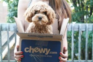 Chewy 1